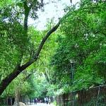 Festival del Bosque de Chapultepec 2014: Doceava presentación